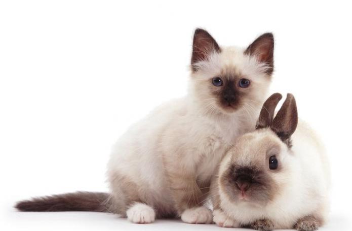 котёнок и кролик на белом фоне