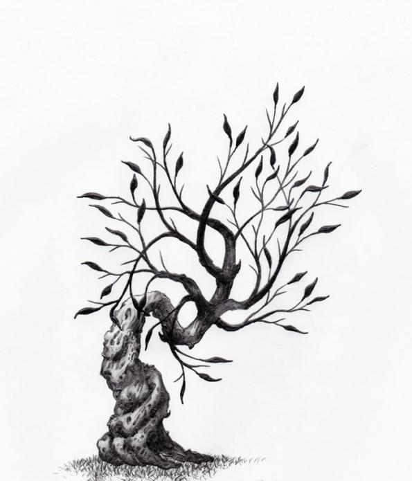 тату дерево, тату кипарис, эскизы