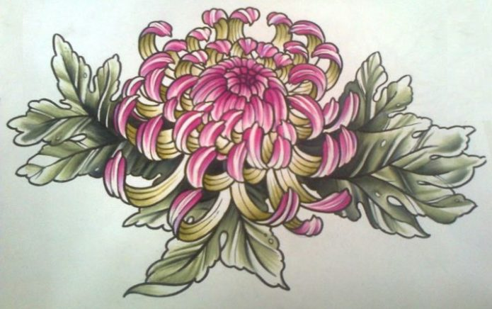 Эскиз хризантемы