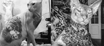 Кот Бес в татуировках