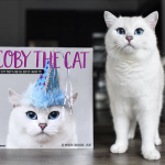 Белоснежный кот Коби