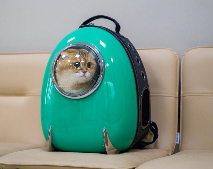 Кот Хасико в рекламе рюкзаков-переносок