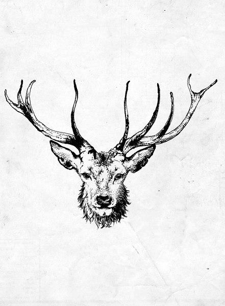 эскиз олень монохромные тату
