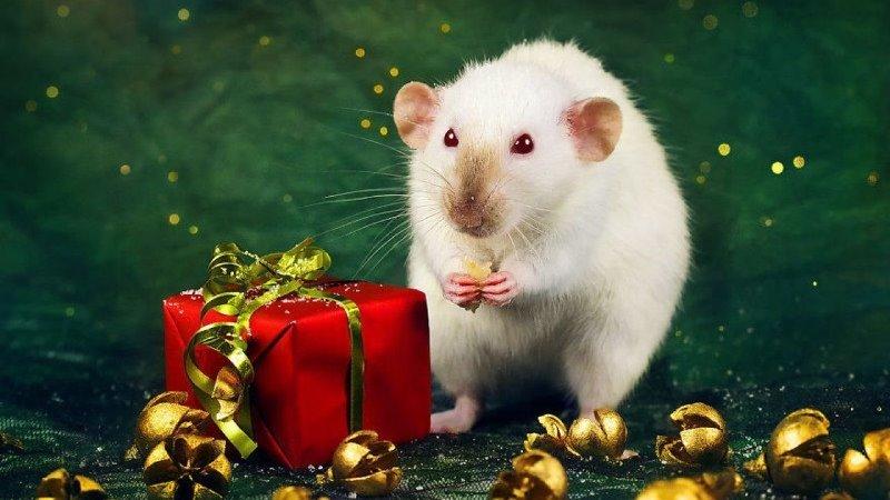 Что порадует белую металлическую крысу: 5 комплиментов символу года