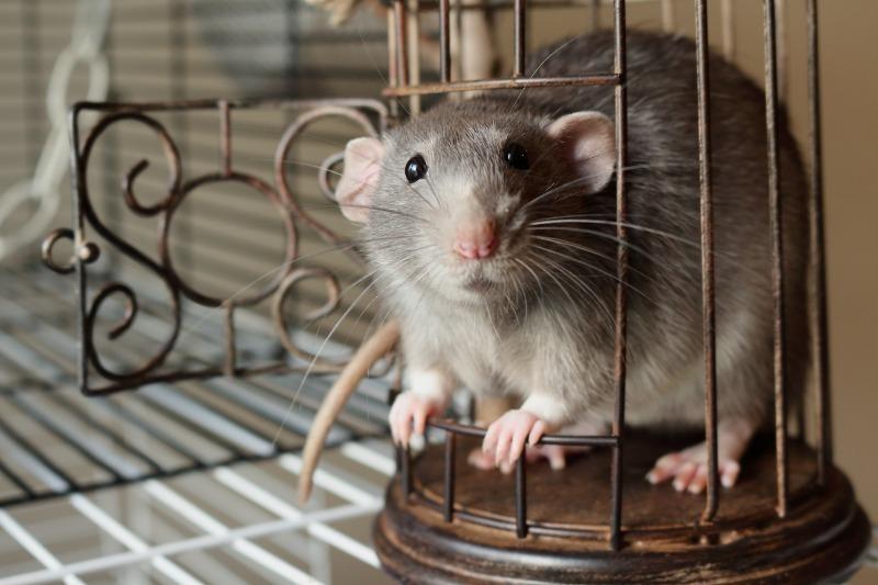 Крыса не оценит: что не стоит дарить на Новый 2020 год