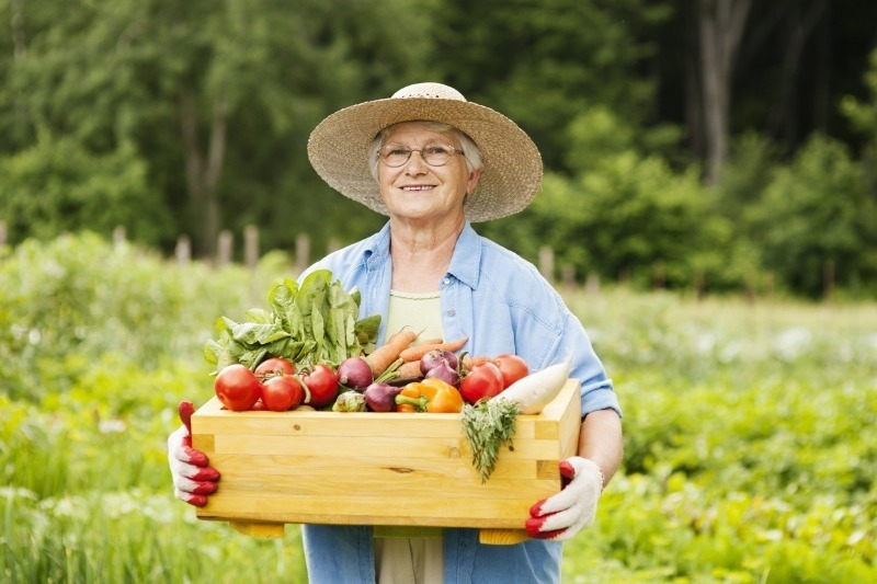 Лучшая картошка растет у Водолеев: знаки Зодиака и огородные культуры